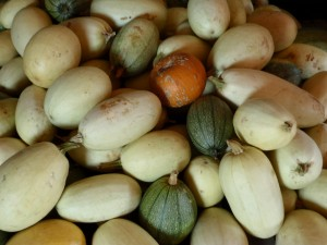 Fall Harvestd Squash