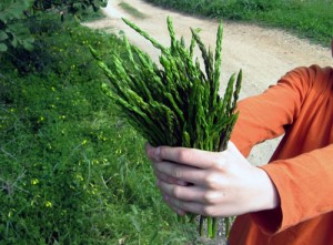 Wild Asparagus Photograph Courtesy of Mallorca Photo Blog