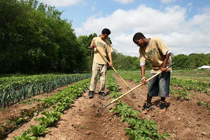 Youth Raking Potatoes, Photo Urban Roots