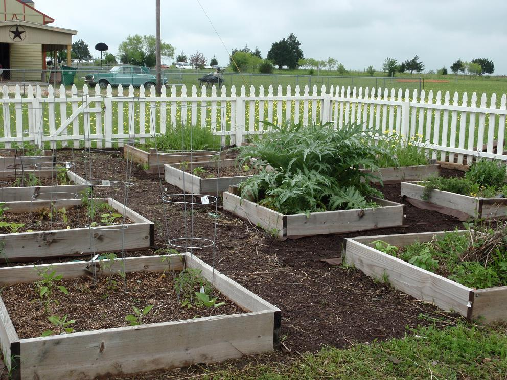 Growing Food in Texas Gardens - Field and Feast - Field ...