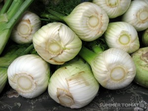 Stack of fennel bulbs by summer tomato