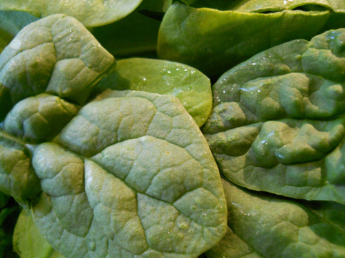 Spinach, Photo: Flickr, katerha