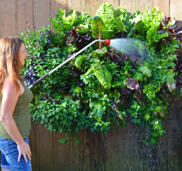 Shawna Coronado watering one of her living wall vegetable gardens.